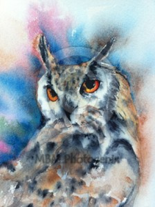 Woolley, Indian Eagle Owl, Water Colour Painting