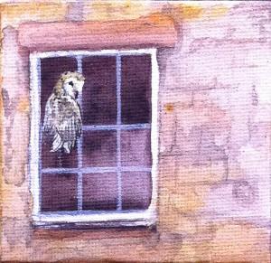 Barn Owl in a Window, painting, art, acrylic, miniature, Mandi Baykaa-Murray