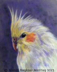 Lutino Cockatiel, Pastel on Velour by Mandi Baykaa-Murray