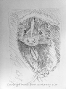 My sketch of Steve the Skunk