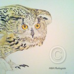 Stage 2 painting of a Siberian Eagle Owl by Mandi Baykaa-Murray