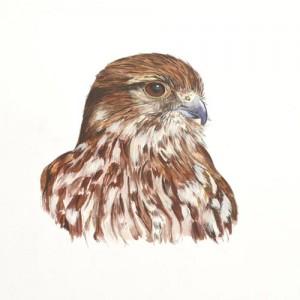 Original acrylic painting of a Merlin Portrait by Mandi Baykaa-Murray.