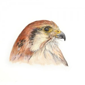 Original acrylic painting of a Hybrid Falcon Portrait by Mandi Baykaa-Murray