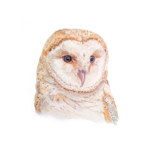 Original acrylic painting of a Barn Owl Portrait by Mandi Baykaa-Murray