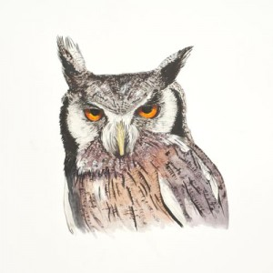 Acrylic Painting of a South African White Faced Owl by Mandi Baykaa-Murray