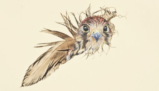 kestrel painted feather