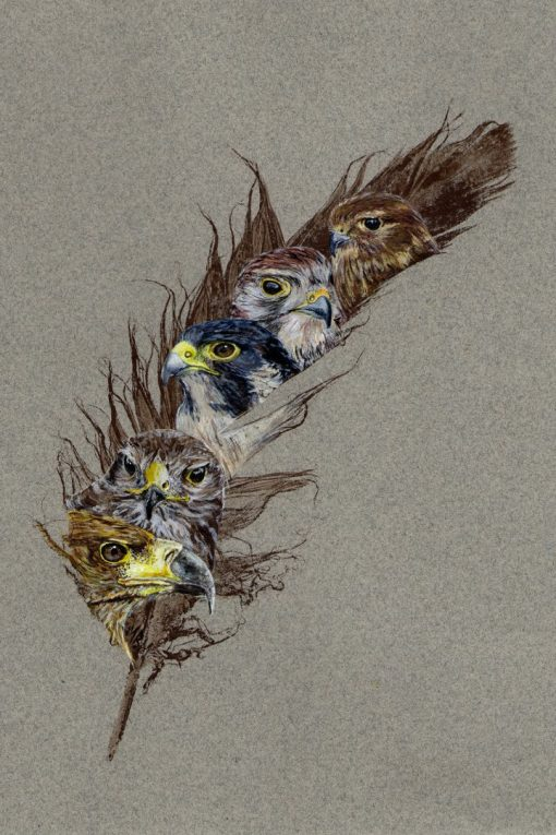 bird of prey Painted feather
