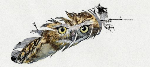 Burrowing Owl Painted Feather