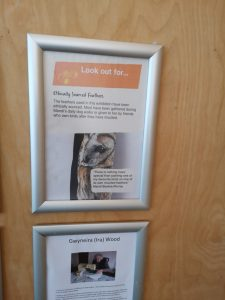 Slimbridge poster advertising my art