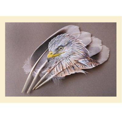 Red Kite Painted Feather greetings card