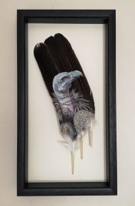 Vulture Painted Feather